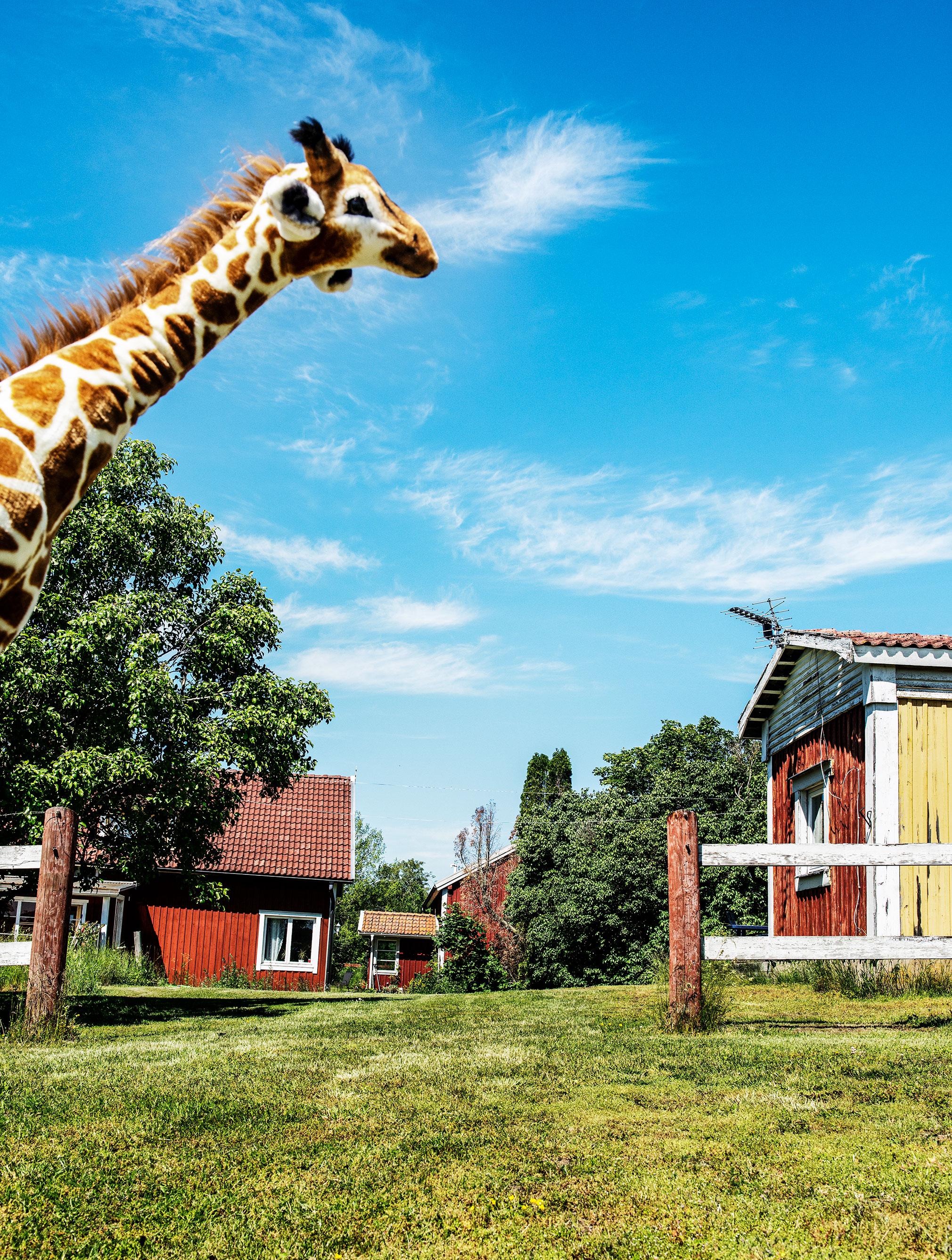 Giraffen. Loranga, Masarin och Dartanjang  fick ett fint mottagande när den släpptes 1969. Redan året därpå kom uppföljaren Loranga, Lorang